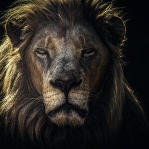 THE KING'S PORTRAIT